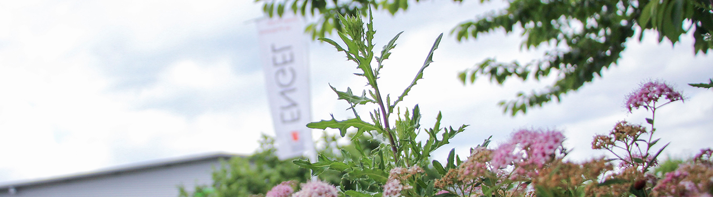 Sträucher und Blumen stehen im Vordergrund. Die Fahne der Engel Präzisionsprofile GmbH ist im Hintergrund zu sehen.