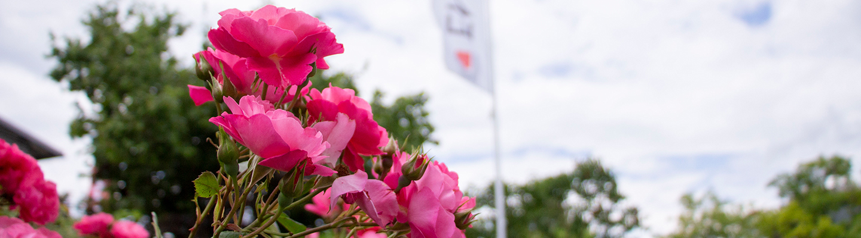 Umweltschonende Produktion ist wesentlicher Bestandteil der Arbeitsweise der Engel Präzisionsprofile GmbH. Auf dem Bild zu sehen: Rosensträucher mit der Engel-Fahne im Hintergrund